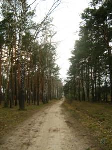Droga w kierunku Winiar