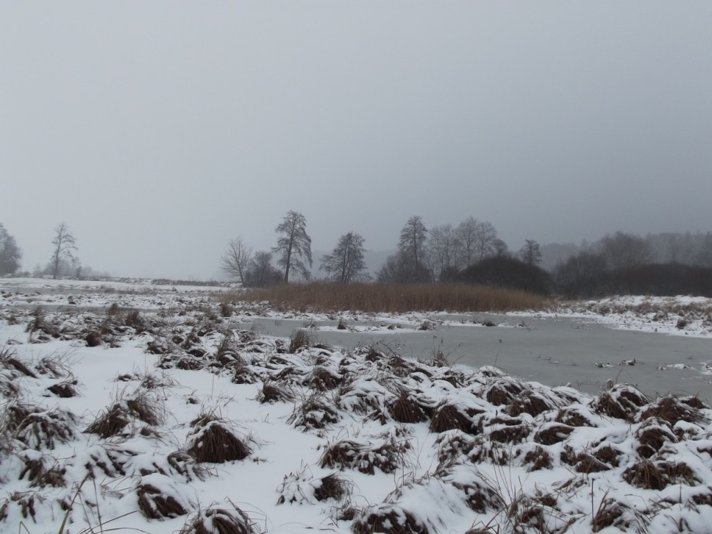 Łąka zimą